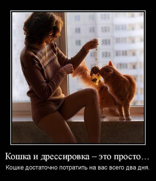Материалы за Май 2012 года - ЛоЛс.ру - Позитивный смешарик