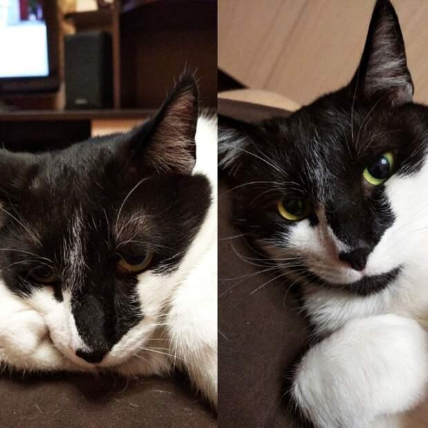 чёрно-белый кот