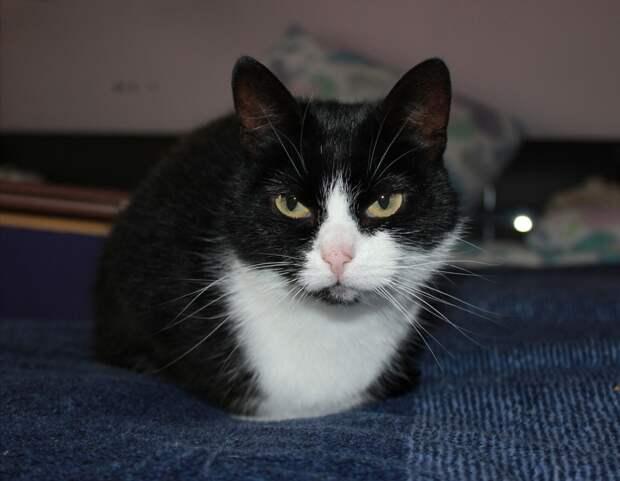 В этой миниатюрной кошечке, размером с котёнка, столько любви и нежности, что с лихвой хватит на большую семью!