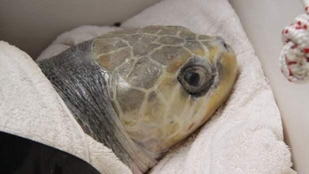 Сотрудники Воронежского заповедника назвали причину массовой гибели черепах