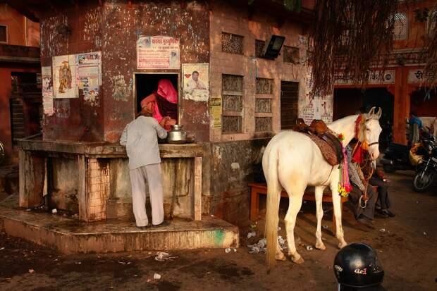 Jaipur15 Оттенки серого. Оттенки розового