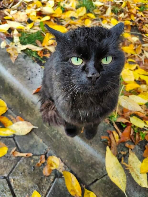 Помогите красивейшему малышу! Бывшедомашний котик эту зиму не переживёт...
