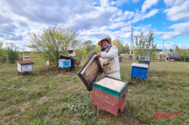 «Там ужас, такое вообще бодяжат». Как купить настоящий башкирский мёд?