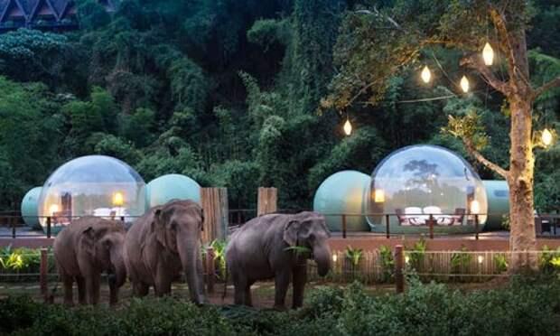 Ночь в прозрачном пузыре посреди джунглей
