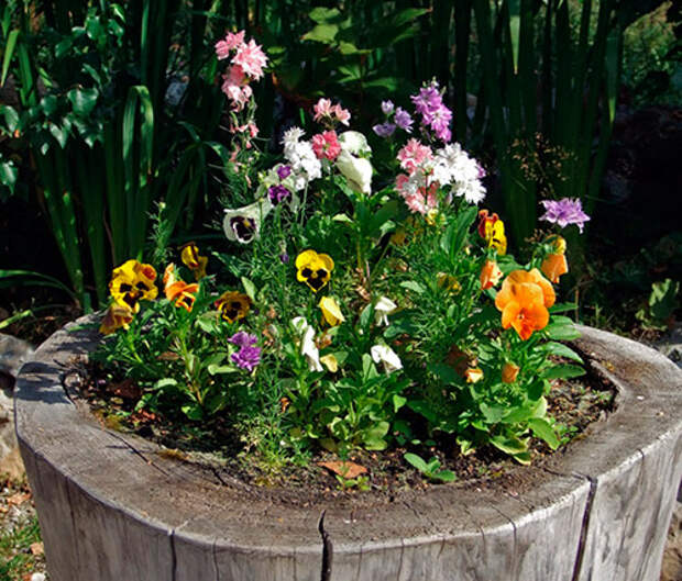 Сажать ли растения на пень?