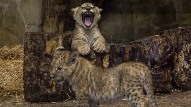 Взрослые билеты в Ленинградский зоопарк станут дороже с 1 мая