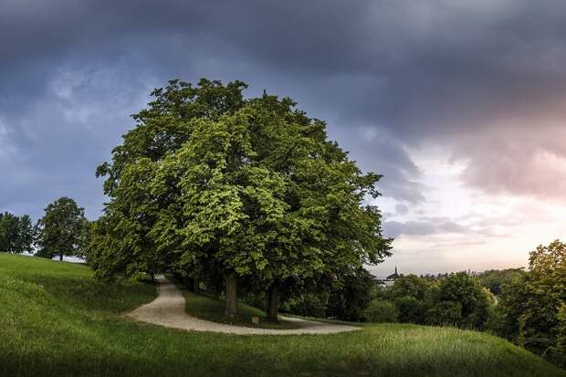 Тест: Сможете по фото определить, как называются деревья?