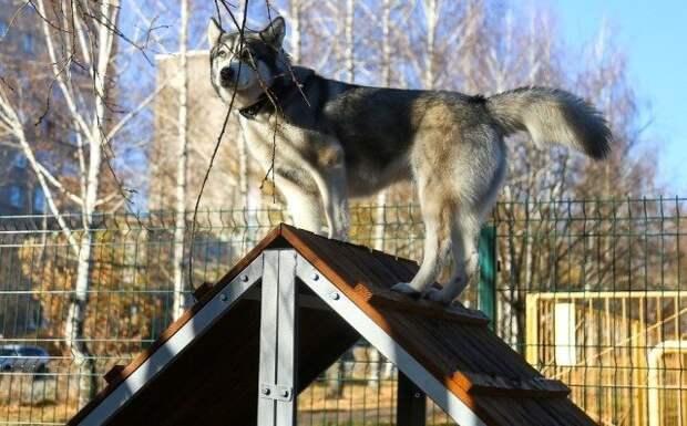 В Ижевске появилась вторая площадка для выгула собак