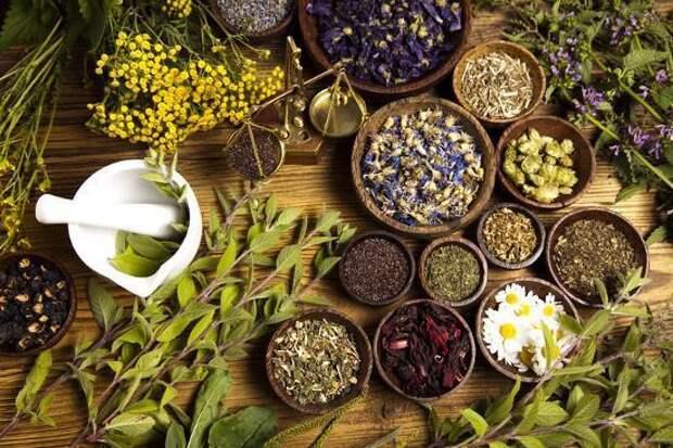 8 трав с мощным антивирусным эффектом