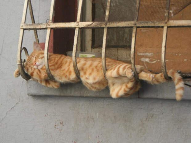 Тающие кошки