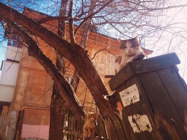 Царь столба город, домашние животные, забор, кот, кошка, село, улица, эстетика