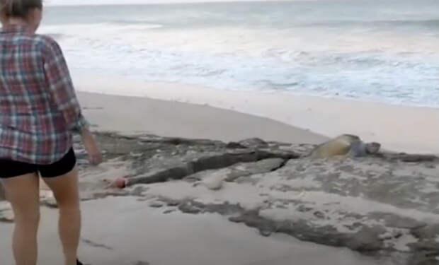 Черепаха на берегу