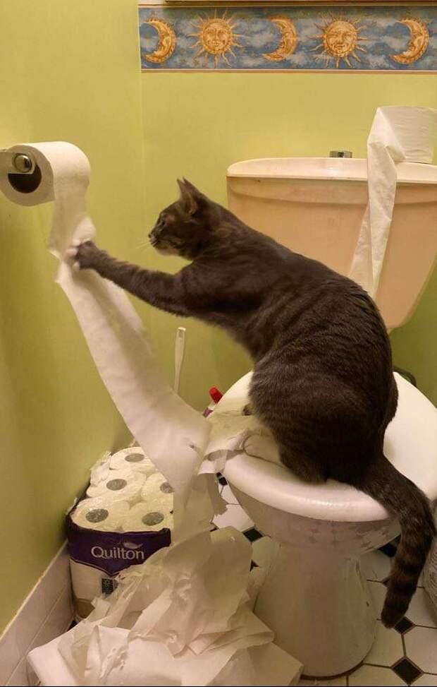 Из-за коронавируса люди почему-то скупают туалетную бумагу. Но кошке плевать на проблемы — она истребляет «ценный продукт»