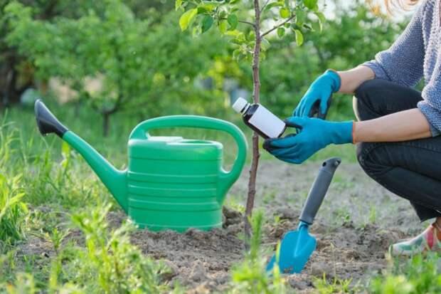 подкормка деревьев поливом