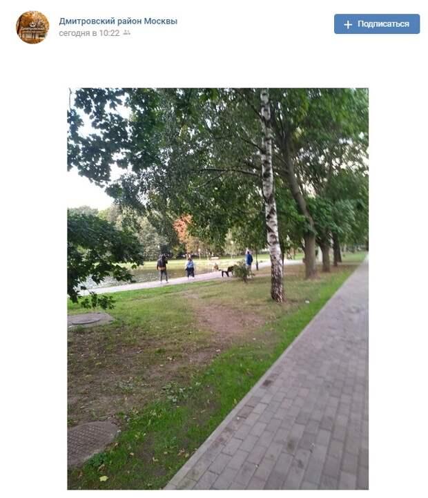 Фото дня: загадочные съемки в Дмитровском районе
