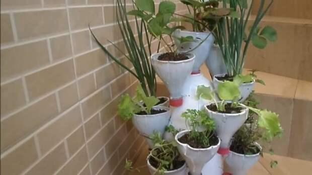Мини-сад в одной вазе! Красивая и простая идея для дома