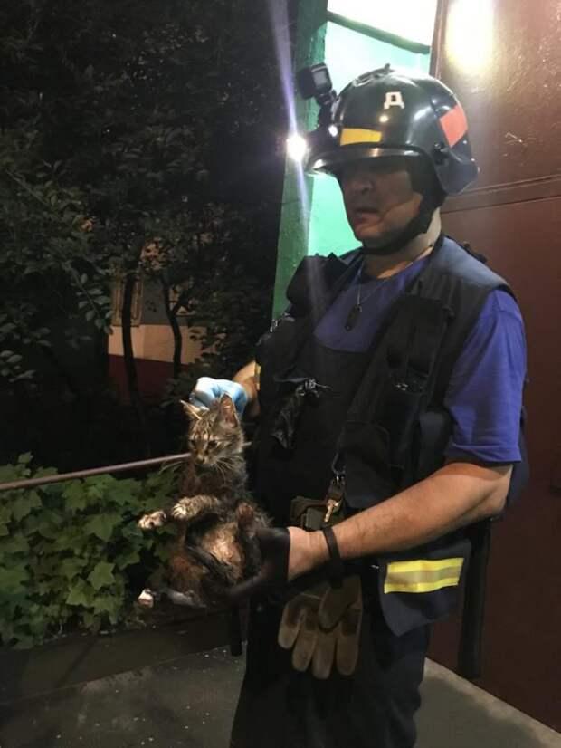 Спасатели вызволили кота, застрявшего в подвальной трубе на Коненкова