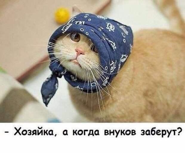 Я никогда не называл себя котовладельцем. У меня нет никаких иллюзий по поводу того, кто кем на самом деле владеет