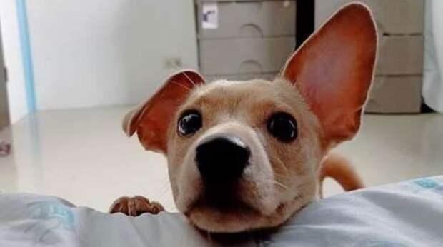 """Хозяйка """"игнорировала"""" пса, делая вид, что не видит его, а тот не понимал, в чём дело"""