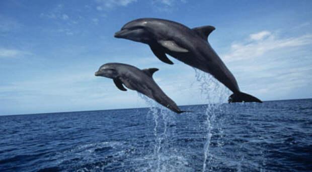 Массовое убийство черных дельфинов в Дании – INFOnotes