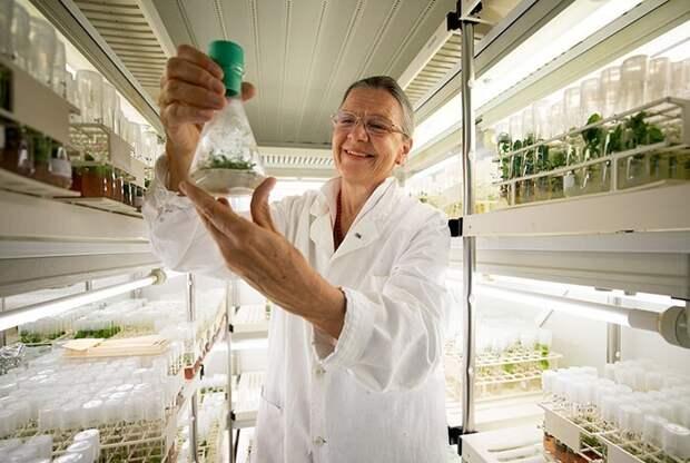 Российские ученые прорастили семена, которым 32000 лет