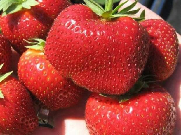 Как повысить урожайность клубники простыми способами?