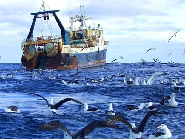 Странствующий-альбатрос-Описание-и-образ-жизни-странствующего-альбатроса-5