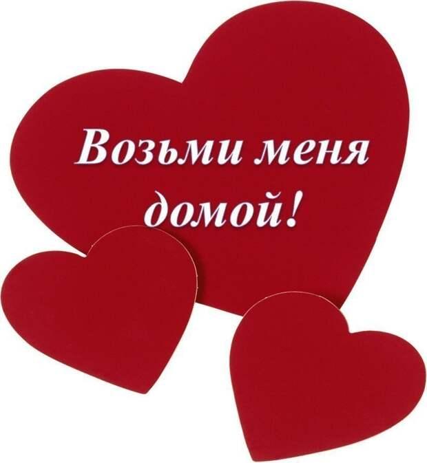 Отдадим эту роскошную красавицу только ответственным, любящим, понимающим!)