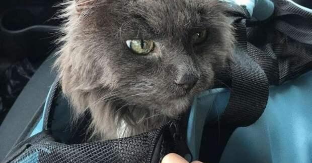 Старого кота сдали в приют. Он сидел расстроенный очень тихо, не зная, что будет дальше