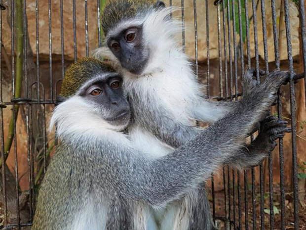 Спасатели уверены, что если бы у обезьянок не была такая тесная связь друг с другом, они бы уже сошли с ума.