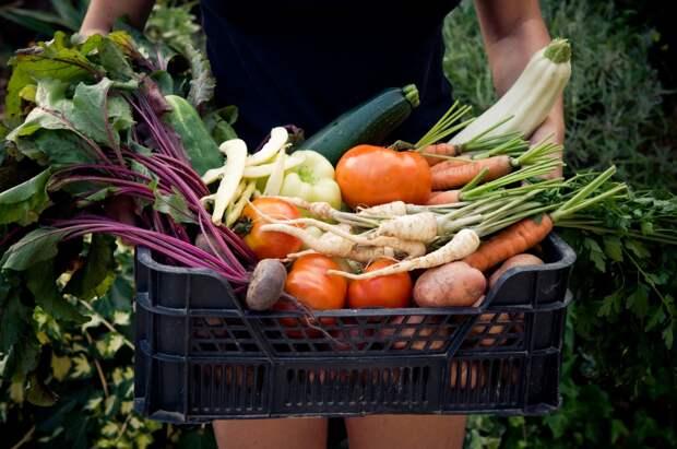 Цель органического земледелия - получить экологически чистый урожай