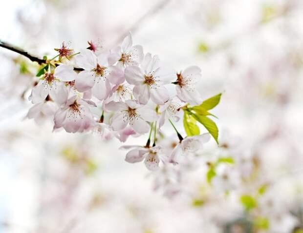 Матвиенко допустила, что длинные майские выходные станут традицией