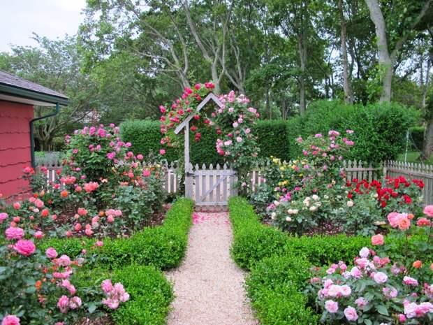 Чем и как удобрять розы