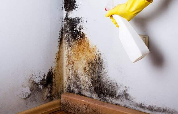 Эффективное средство от плесени из обычных ингредиентов, которые есть у каждого дома