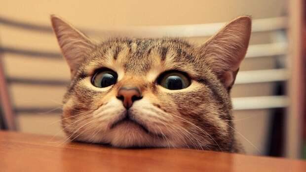 12. Кошка не хнычет, что у нее кончились целые колготки. жены, интересное, кошки, юмор