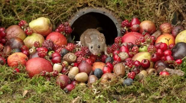 Фотограф построил для мышат фэнтези-деревню в стиле хоббитов