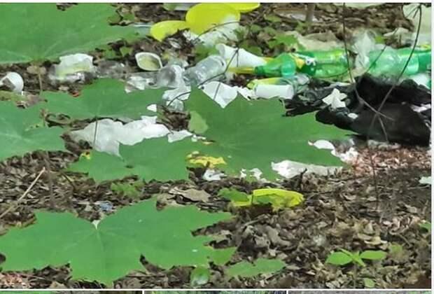 Отдыхающие около Шибаевского пруда оставили после себя свинарник