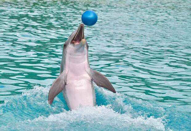 Дельфинарий в севастопольской Артбухте демонтируют