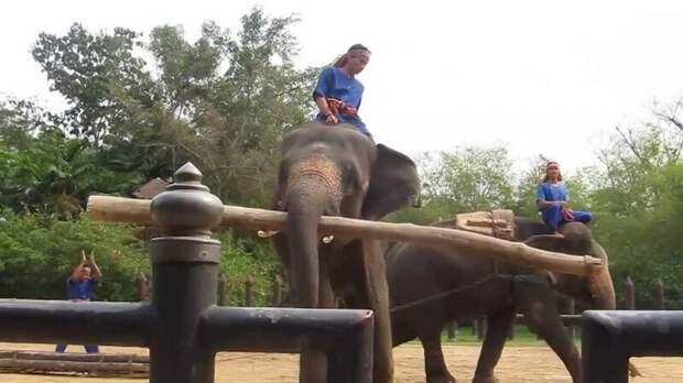 Откуда у слона длинный хобот