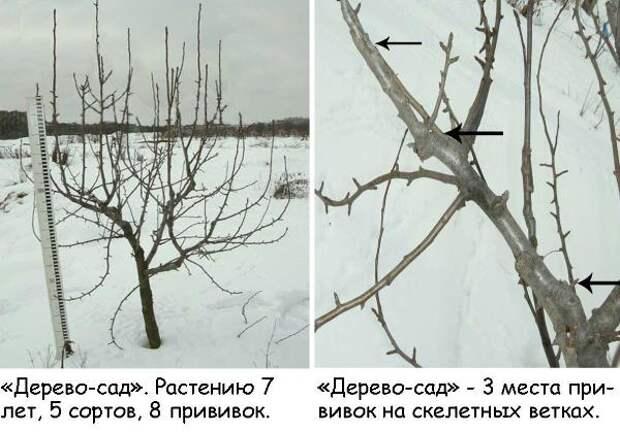 Трёхэтажные деревья