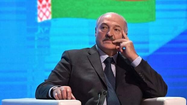В Белоруссии кот-предсказатель Мякиш рассказал о будущем Александра Лукашенко