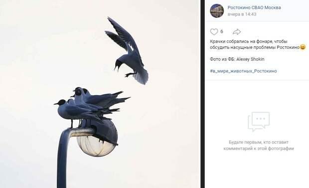 Фото дня: насущные проблемы в Ростокине  обсудили на фонаре