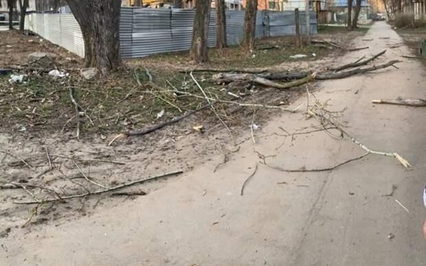 Внучка рязанки, на которую упал сук дерева, рассказала о состоянии бабушки