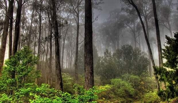 Шотландец сфотографировал в лесу похожего на астронавта гуманоида