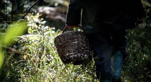 Сентябрьским вечером на Бобруйщине люди в погонах нашли заплутавшего грибника.