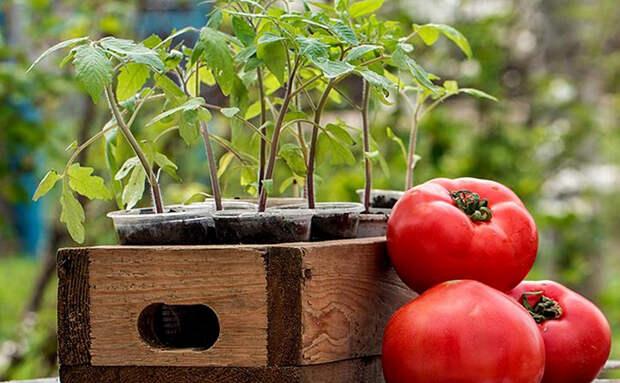 Сеем овощи на рассаду уже в марте: выбираем, что сажать для раннего урожая