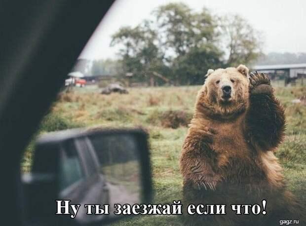 145654_smeshnaya_podborka_kartinok_s_nadpisyami_gagz_ru