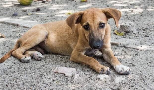 ВБашкирии планируют построить приюты для трех тысяч бездомных животных
