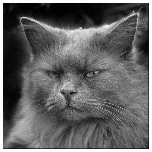 Жизнь с котом, или как не сойти с ума от одиночества.4
