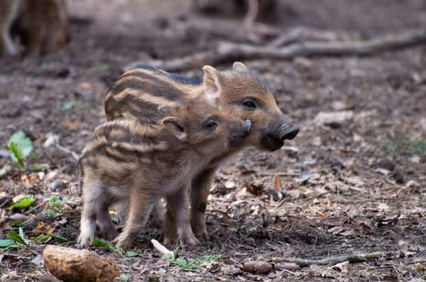 В «Лосином острове» напомнили о запрете кормления диких животных